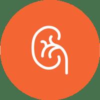Über das Multiple Myelom