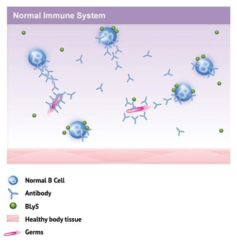 Diagram: Normal Immune System