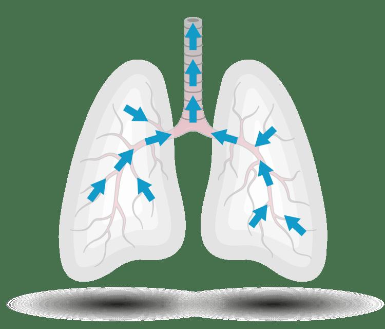 Airflow through lungs