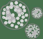 Eosinophils cell diagram