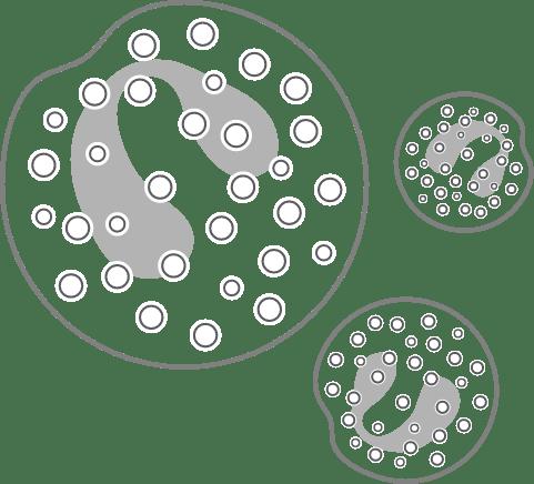 Eosinophils diagram