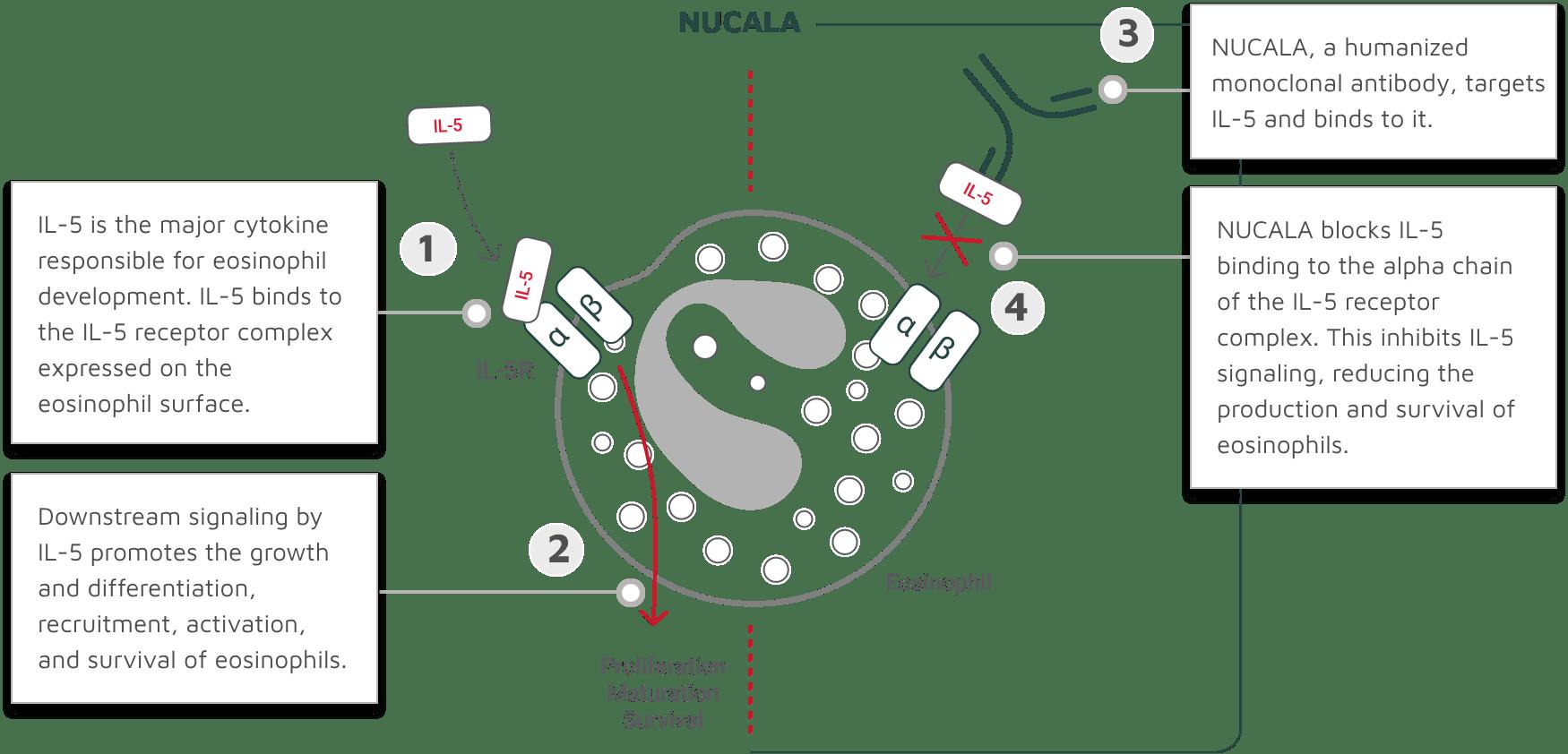 NUCALA MOA diagram
