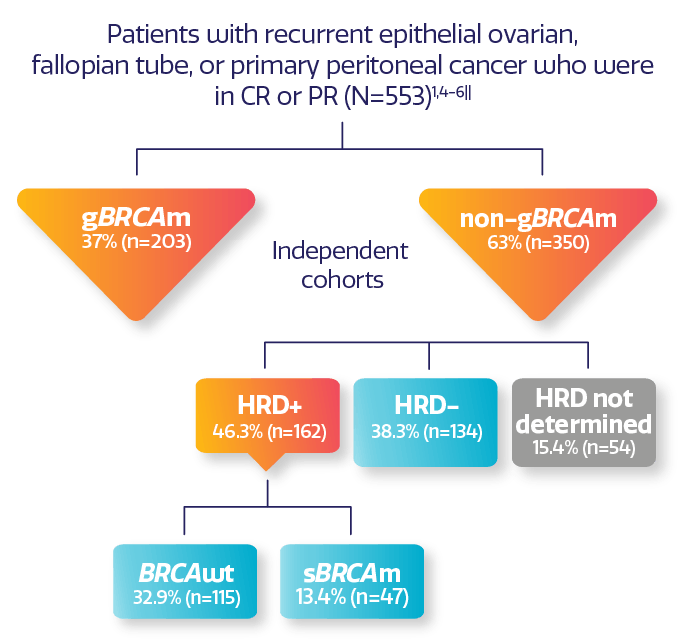 Visual showing NOVA trial design of adult patients with recurrent epithelial ovarian, fallopian tube, or primary peritoneal cancer who were in CR or PR.