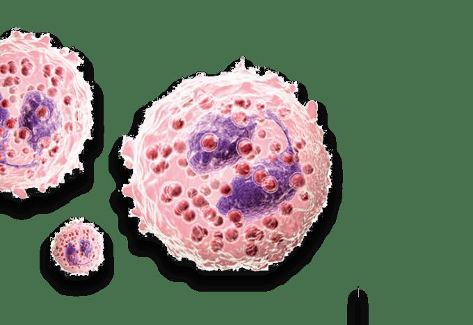 Eosinophils